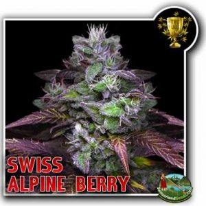 Alpine Berry Bud