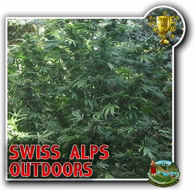 Swiss Alps Outdoors