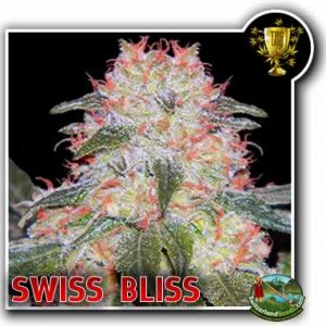 Swiss Bliss