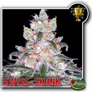 Swiss Skunk