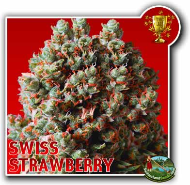Swiss Strawberry